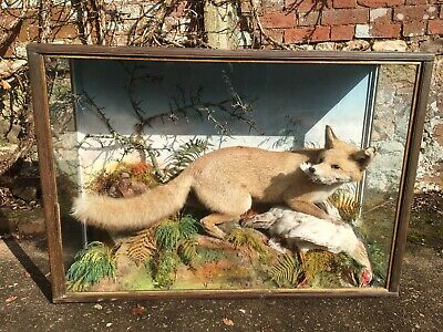 Antique Victorian Taxidermy Fox And Bird By Jeffries Of Carmarthen • 295£
