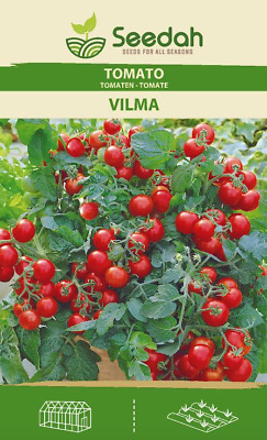 Cherry Tomato Seeds-VILMA- Dwarf.Ideal 4 Small Gardens-Seedah Introductory Offer • 1.50£