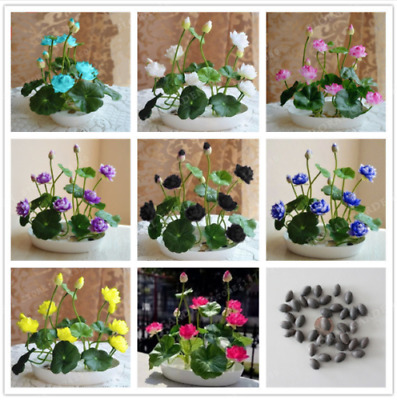 $ CDN3.78 • Buy 10 Bowl Lotus Flower Seeds Mixed Colorful Rare Water Lily Aquatic Plants Garden