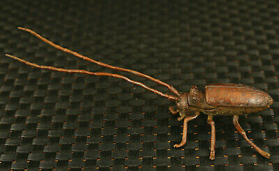 Chinese Old Bronze Hand Cast Macrochaeta Beetle Statue Home Decoration • 59£