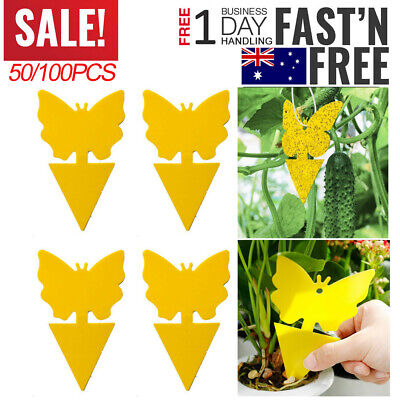 AU18.95 • Buy 50/100 Pcs Dual Sided Sticky Trap Insect Killer Whitefly Thrip Fruit Fly Gnat AU