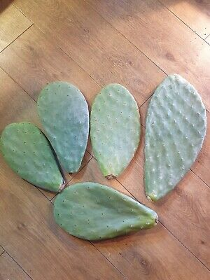 Opuntia Ficus - Prickly Pear Pads 700g-800g • 10.85£