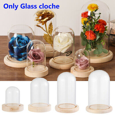 £11.23 • Buy 6 Sizes Glass Dome Display Bell Jar Cloche On Wooden Base Table Decorative