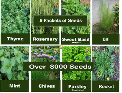 £5.99 • Buy Herbs Pack Of SEEDS - Dill Thyme,Rosemary, Basil, Mint,Chives,Parsley 8 Packets