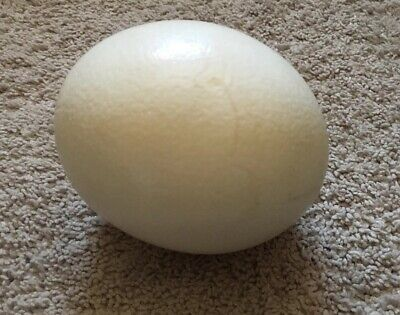 £17.74 • Buy Genuine Ostrich Egg Shell For Craft And Decoration Blown Out Clean