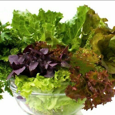 £1.79 • Buy Italian Baby Leaf Lettuce Salad Bowl Mixed Lettuce 500 Seeds Cut & Come Again