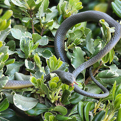 $ CDN12.58 • Buy 49  Realistic Rubber Fake Snake Halloween Lifelike Scary Props House Party Decor
