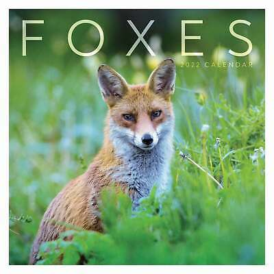 £13.99 • Buy Foxes 2022 Wall Calendar Hanging Planner
