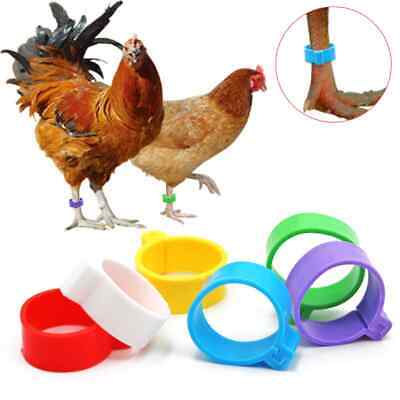 £7.45 • Buy Pack Of 20 X 16mm Chicken Poultry Flat Leg Rings In 5 Mixed Colours - Free Post