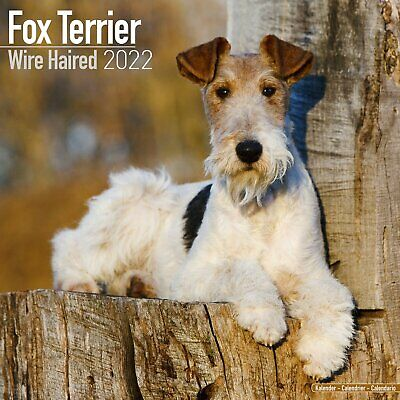 £9.99 • Buy Wirehaired Fox Terrier  Dog - 2022 Square Wall Calendar ****PRE-ORDER****
