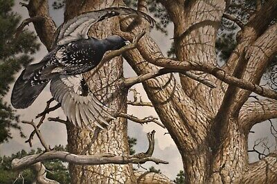 £425 • Buy Original Keith Brockie (b.1955) Gouache Painting Of A Capercaillie In Woodland