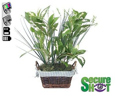 $599.99 • Buy Small Plant Covert Hidden Spy Nanny Camera With Motion Activated DVR