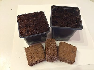 Coir Compost Blocks For 9X9X8 & 9X9X10 Pots - Seeds/Cuttings Expands In A Jiffy • 8.50£