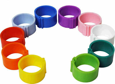 50 Chick Leg Rings, 8mm Mixed Colours For Poultry Chicks & Growers   • 4.95£