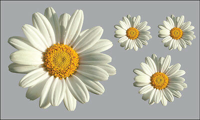 Daisy Flower Decals Car Stickers Graphics Nursery Wall Window Decorations Art • 2.99£
