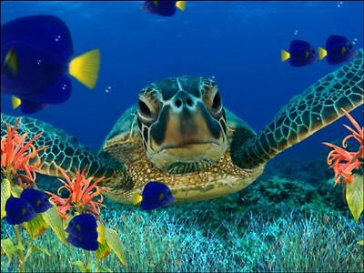 £4.99 • Buy Under The Sea Turtle Swim Background Edible Cake Topper Wafer/Icing Decoration