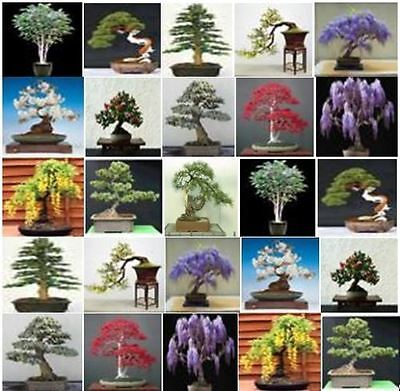£5.87 • Buy Collection Of 200 X Mixed Tree Seeds. Ideal For Growing Into Bonsai Trees!!