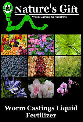 Sweet Peas Seeds Plants, Worm Casting Extract Concentrate Fertilizer Organic • 15.45£