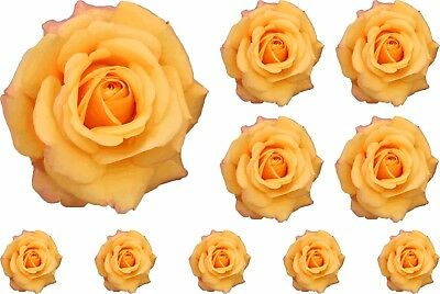 Yellow Painted Rose Flower  Stickers Graphics Nursery Wall Window Decoration Art • 3.99£