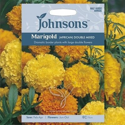 AFRICAN MARIGOLD (Tagetes Erecta Double Mixed) 100 Seeds (#2015) • 1.65£