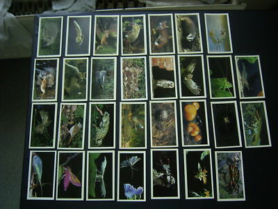 Grandee Cigar Cards Cigarette Card Set Variants • 5.99£