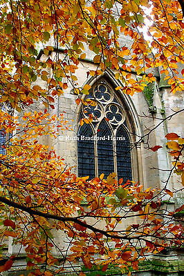 Autumn Leaves Gothic Arch Window Art Photograph, Mounted Print, Cards • 18.95£