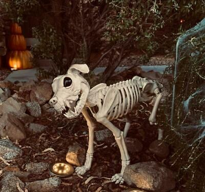 $111.99 • Buy Realistic Life-Sized Labrador Dog Pose-able Skeleton Halloween Prop 36 L X 21 H