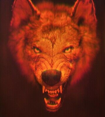 £115.37 • Buy 11x16  28x40cm Red Wolf - True 3D Laser Hologram Picture On Glass