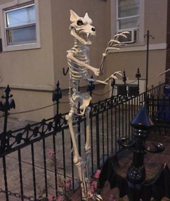 $151.99 • Buy 5-Ft Life-Sized Werewolf Wolf-man Skeleton Pose-able Realistic Halloween Prop