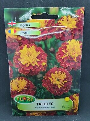 African Marigold Tagetes Patula Nana Bright Annual Hardy Flower 175 Seeds • 2.15£