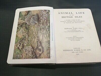 Animal Life Of The British Isles By Edward Step. 1921. • 10£