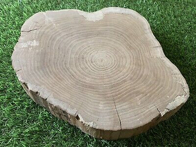 Air Dried Solid English Hawthorn Tree Ring Coffee Table Top Stool Epoxy Resin 04 • 50£