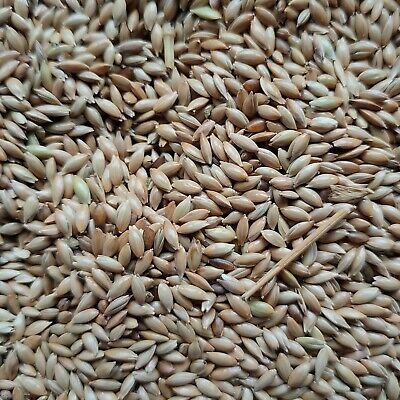 Canary Seed, Wild Bird Feed, Budgie Feed, Canary Feed, Fast FREE Delivery • 4.95£