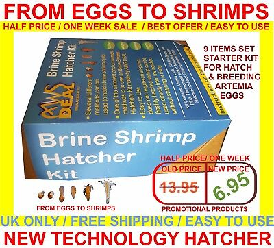 £6.55 • Buy  Brine Shrimp Hatcher Incubator / FROM EGGS TO LIVE SHRIMPS / EASY TO USE