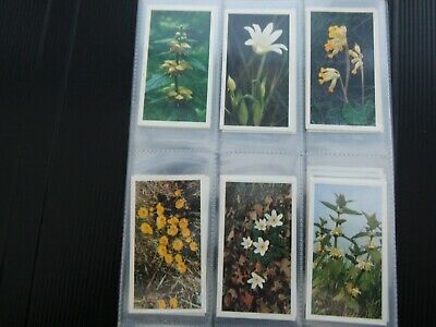 One Complete Set Cigar Cards Player's Grandee Britain's Wild Flowers • 0.99£