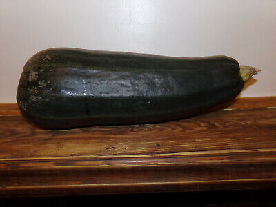 £1 • Buy Courgette / Marrow Seeds X 10