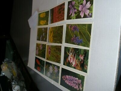 Grandee Cigar Collector Cards, Wild Flowers, Full Set.  See In Good Condi Photos • 4£