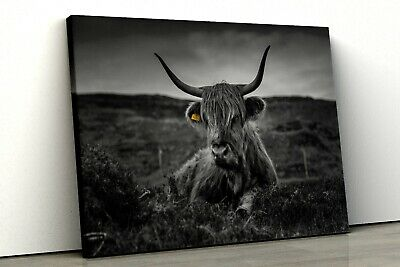 £9.99 • Buy Highland Cow Black And White Framed Canvas Print Wall Art, Kitchen Art Pp480