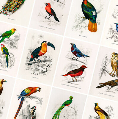£1.99 • Buy Vintage Birds Prints - Animal Posters - A4 A3 A2 - Antique Home Decor - Wall Art