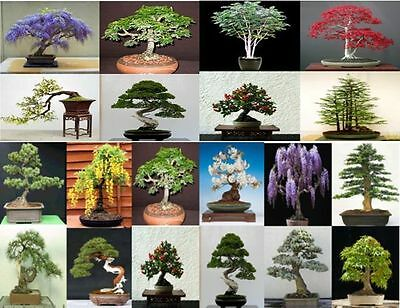 20 Seeds, 5 Seeds From 4 Tree Varieties. Tree Seeds That Can Be Used For Bonsai. • 3.59£