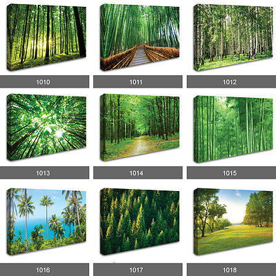 £17.99 • Buy Forest Woodland Trees Sun Stunning Scenery Photo Wall Art Landscape Canvas RMC