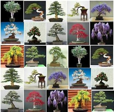 £3.07 • Buy Collection Of 50 X Mixed Tree Seeds. Ideal For Growing Into Bonsai Trees!!