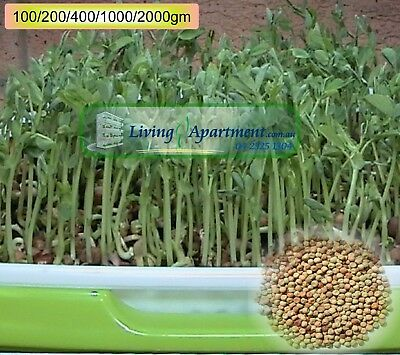AU4.86 • Buy Sprouting Snow Pea Seeds (real Name Field Pea) ( Sprouts , Sprouting Seeds )