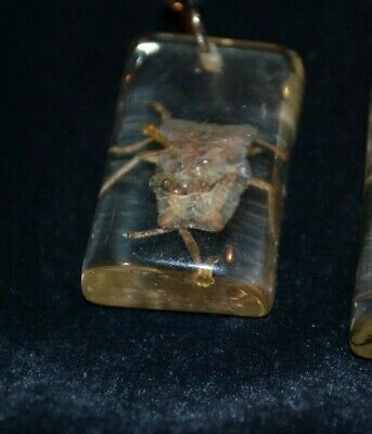 $5.99 • Buy New Insect In Clear Resin Bug Keychain Jewelry & Gifts Nature Science Entomology