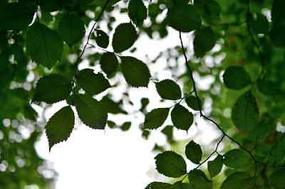 Large Canvas Of Leaves, Tree, Sky, Depth Of Field, Ary, Artistic, Photo, Print • 22.49£