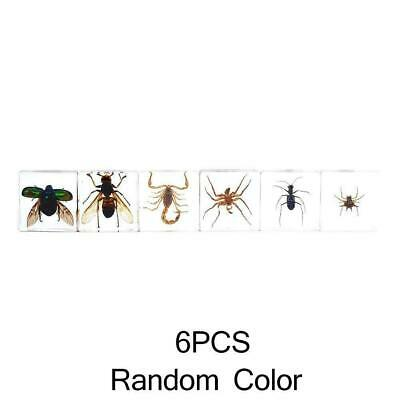 $3.99 • Buy Creative Various Real Insects In Clear Resin Insect Education Toy Specimen B2Z6