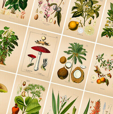 VINTAGE BOTANICAL POSTERS PRINTS - A4 A3 A2 Poster - Wall Art Home Flower Decor • 3.49£