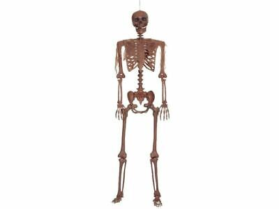 $74.99 • Buy Skeleton Life Size Prop Human Halloween Haunted House Posable Plastic Decayed