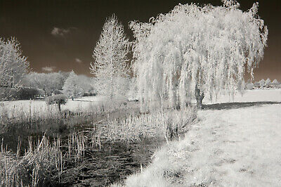 Nikon D50 Infrared Converted Camera 720nm Standard Infrared Converted Camera IR. • 147£