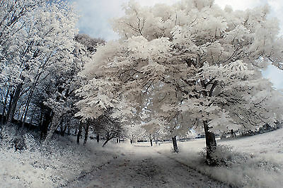 Nikon D80 Infrared Converted 720nm IR Camera Body Only Standard Infrared IR. • 199£